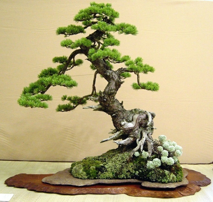 Wundersch ne bonsai baum kompositionen for Wandtattoo blumentopf