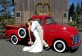 Kleine Hochzeit planen: wie macht man das?