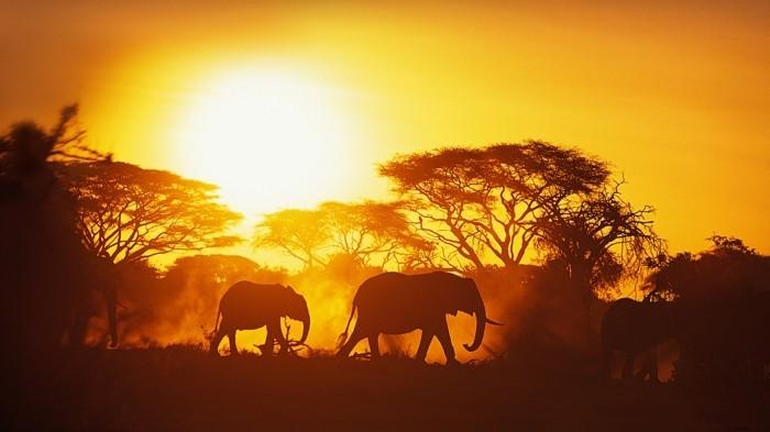 rundreisen-in-afrika-elefanten-in-afrika