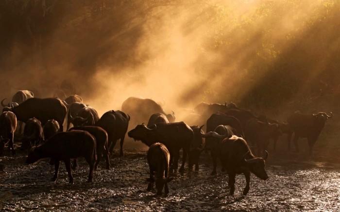 rundreisen-in-afrika-safari-in-afrika