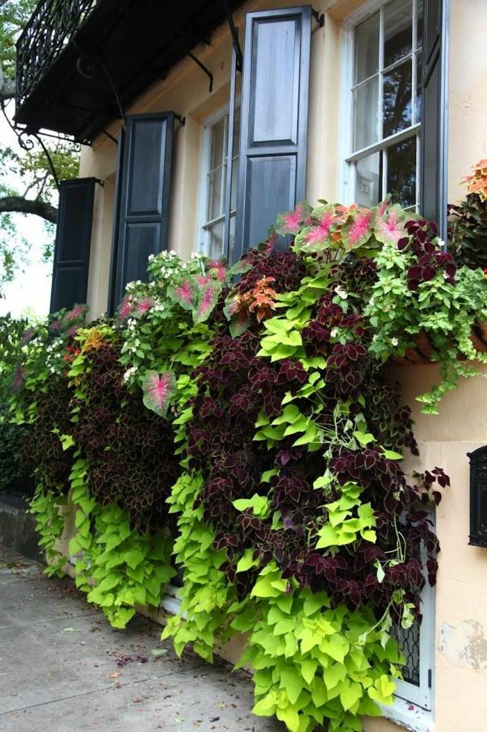 Haus-viele-Fenster-Läden-Blumentöpfe-romantisch-gemütlich