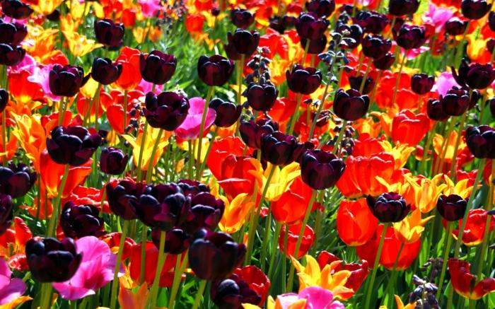 Park-Gestaltung-sonniges-Wetter-Blumen-verschiedene-Farben-gelbe-Tulpen-rote-Tulpen