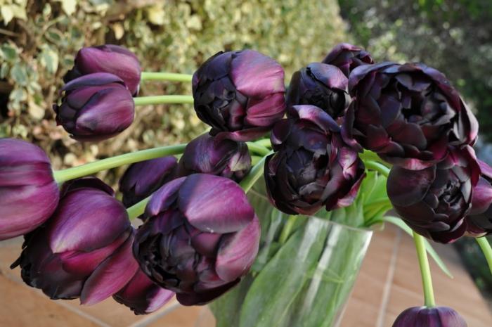 Strauß-wunderschöne-schwarze-Tulpen-Frühlingsblumen