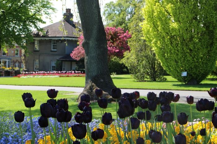 Vielfalt-von-Blumen-Tulpen-schwarz-Büsche-Baum-Häuser-Idylle