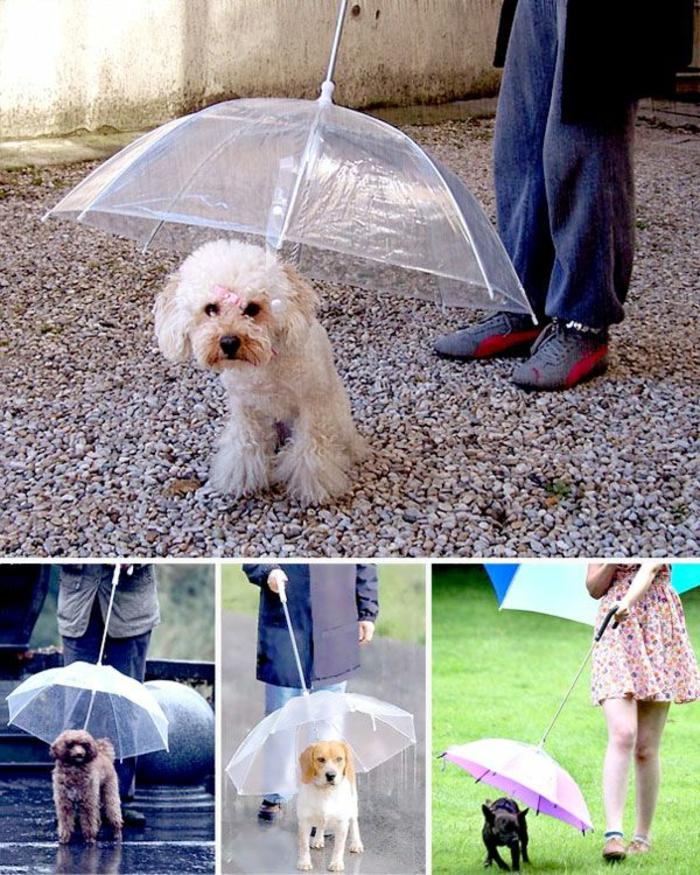 ausgefallene-regenschirme-kleine-wunderschöne-hunde