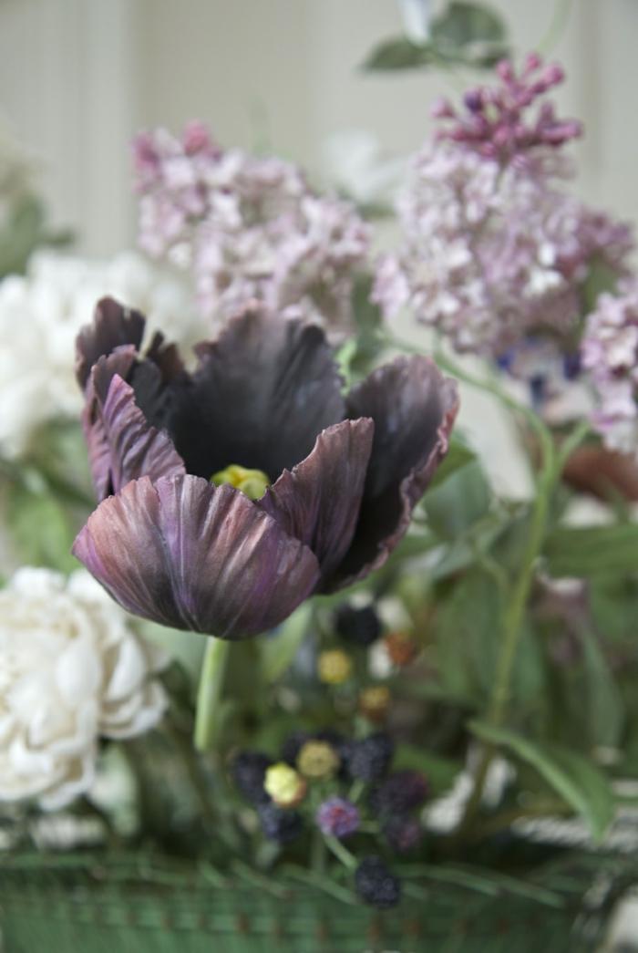 einmaliges-Foto-schwarze-Tulpe-romantisch-nostalgisches-Gefühl