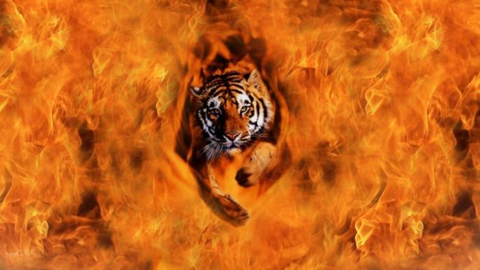 feuer-wallpaper-ein-tiger