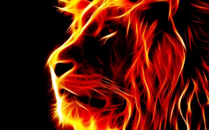 feuer-wallpaper-eine-schöne-löwe