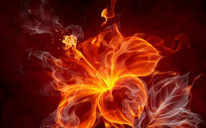 feuer-wallpaper-eine-super-schöne-blume