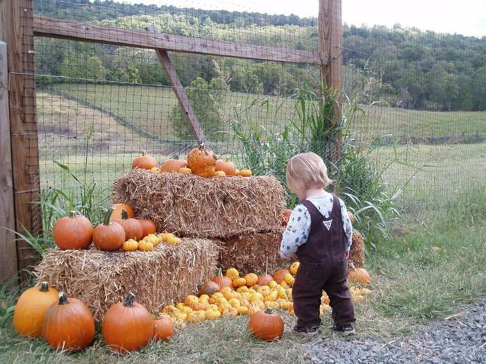 halloween-für-kinder-ein-kleines-kind-neben-kürbissen