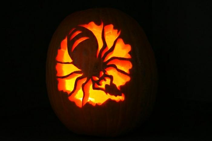 halloween-kürbisse-eine-spinne