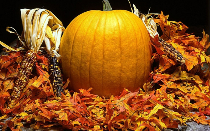 halloween-kürbisse-gelbes-modell