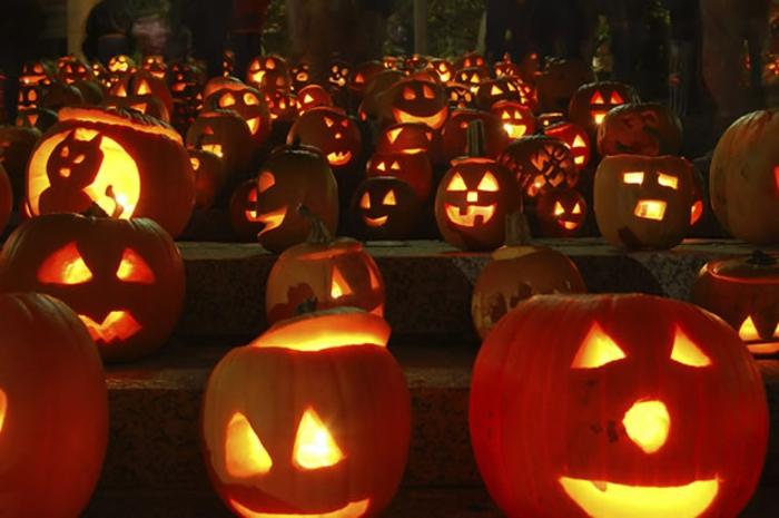 halloween-kürbisse-super-interessantes-foto
