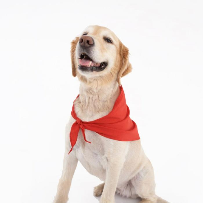 Wunderbar Bild Eines Hundes Zu Färben Bilder - Beispiel ...