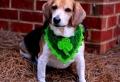 Super süße Bilder von Halstuch für Hund!