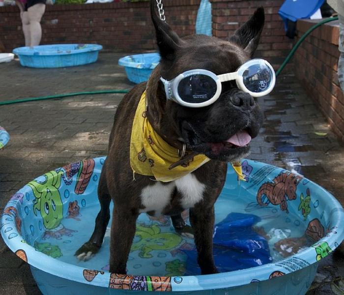halstuch-für-hund-richtig-originelle-brillen