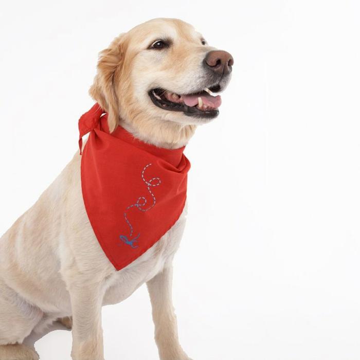 halstuch-für-hund-rotes-modell