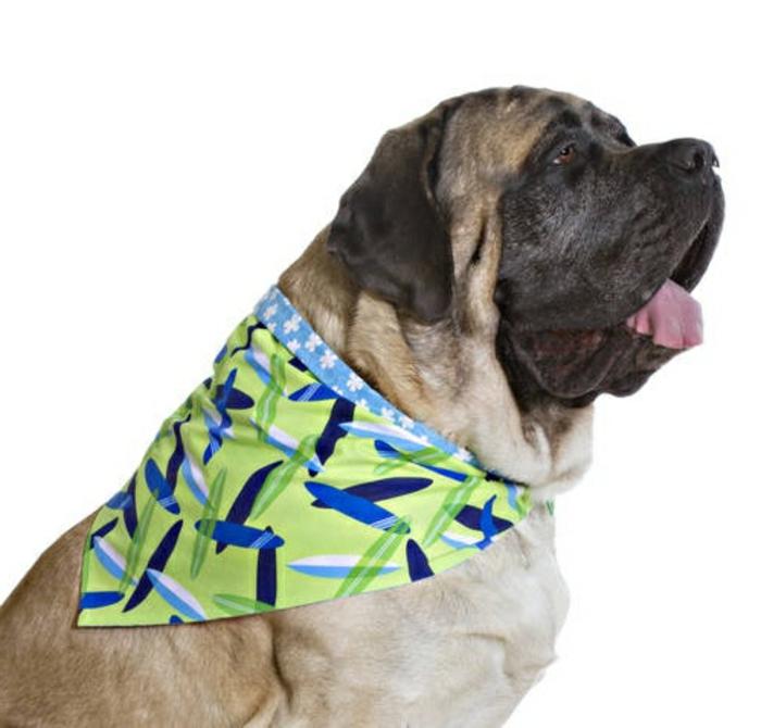 halstuch-für-hund-schöne-grüne-farbe