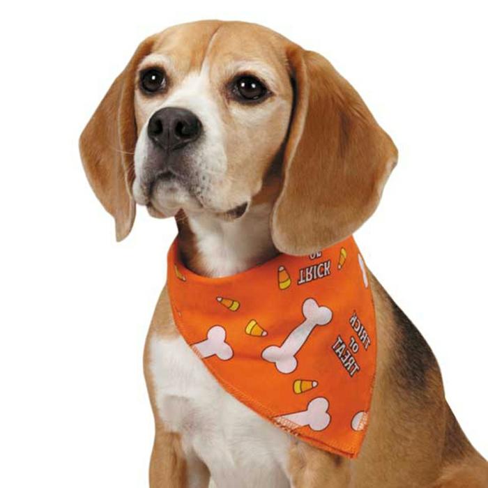 halstuch-für-hund-schönes-modell-orange-farbe