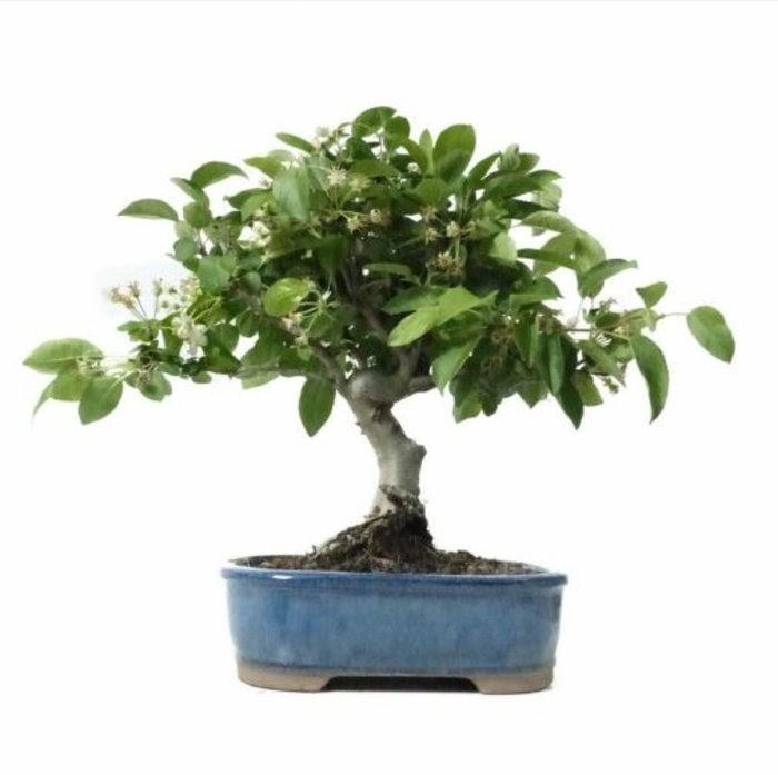 hochzeitsbaum-fur-drausen-zierapfel