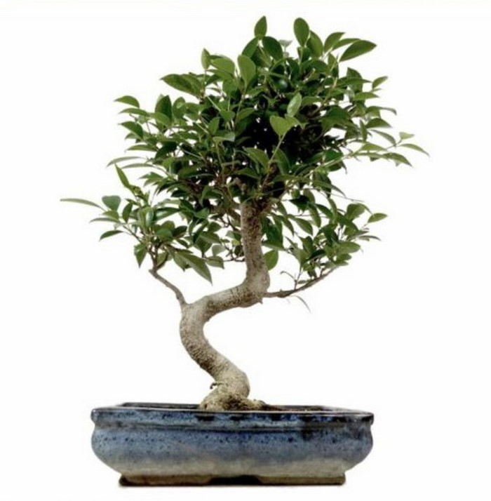 hochzeitsbaum-fuer-drinnen-chin-feigenbaum