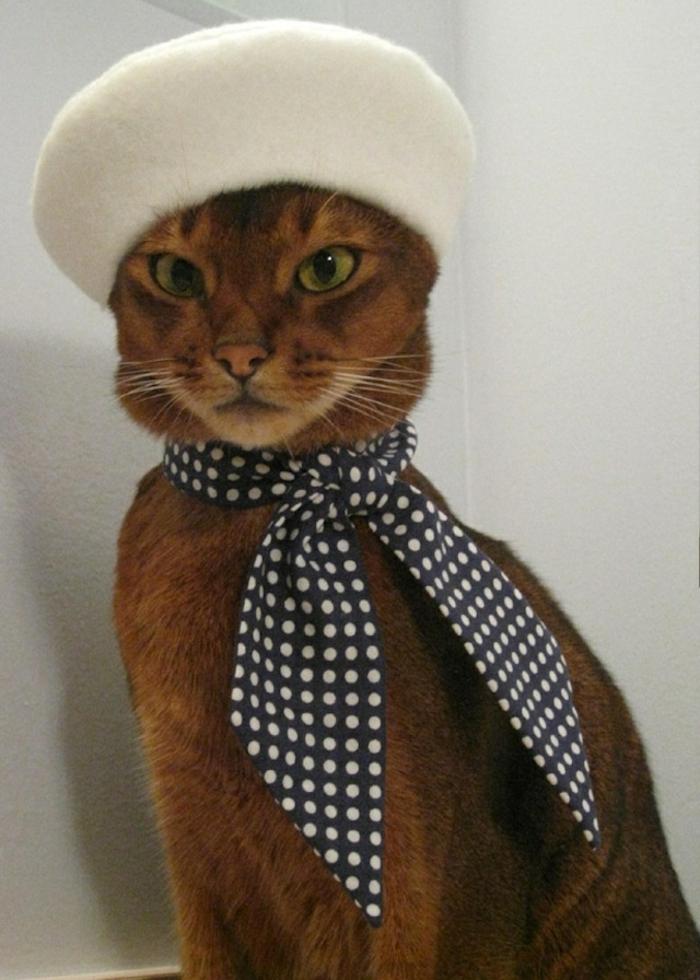 lustiges-Foto-Katze-französische-Mütze-weiß-Wolle-Polka-Dot-Band