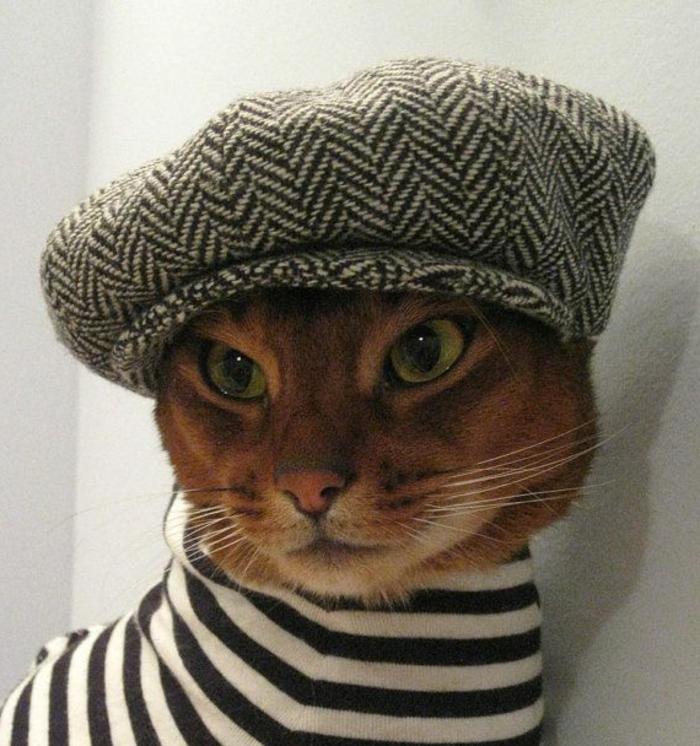 lustiges-Foto-Katze-französischer-hut-Barett-Mütze