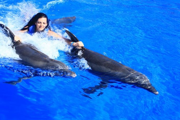 mit-delfinen-schwimmen-blaues-wasser