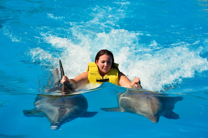 mit-delfinen-schwimmen-eine-schwimmende-frau