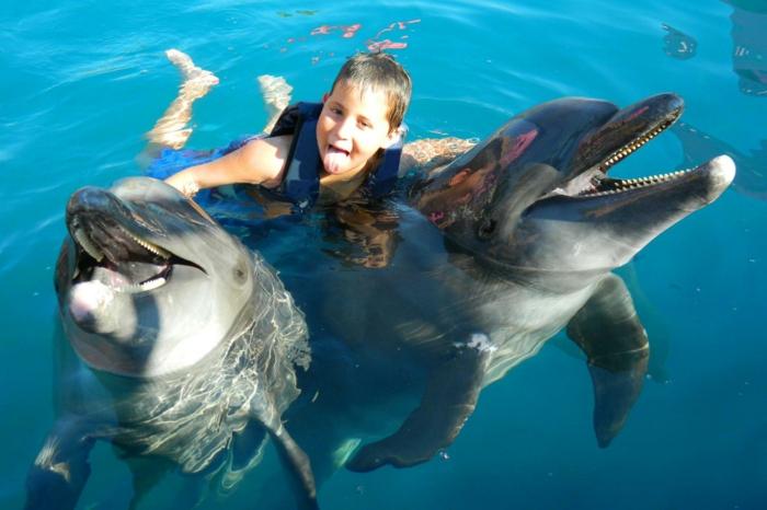 mit-delfinen-schwimmen-einmaliges-ambiente