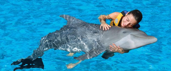 mit-delfinen-schwimmen-richtig-super-aussehen