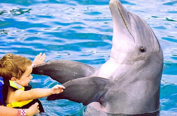 mit-delfinen-schwimmen-süßes-aussehen