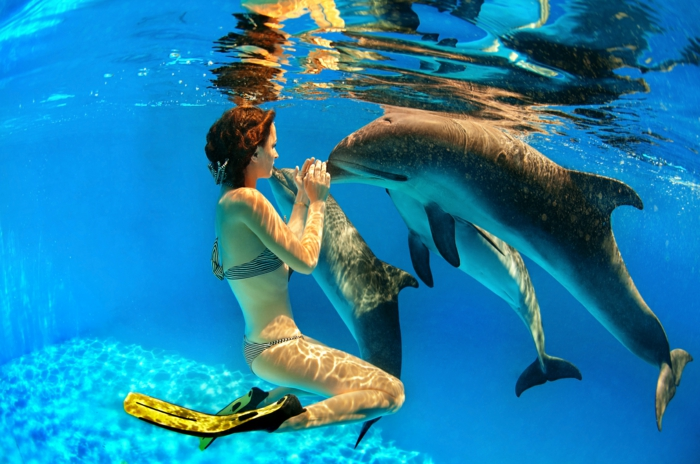 sie tr umen davon mit delfinen schwimmen zu k nnen. Black Bedroom Furniture Sets. Home Design Ideas