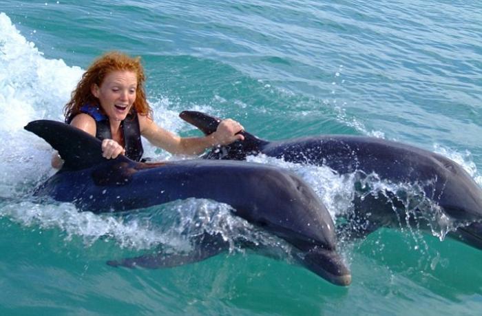schwimmen mit delfinen - wunderschönes bild