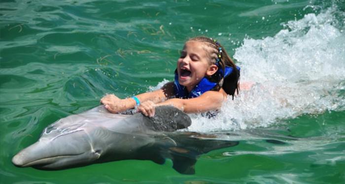 mit-delfinen-schwimmen-super-schöne-illustration