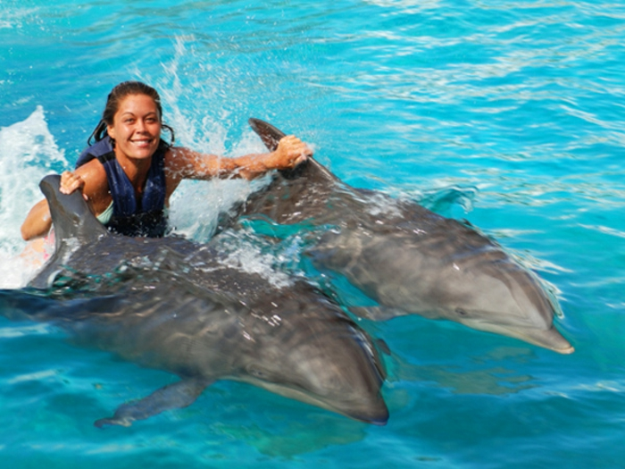 mit-delfinen-schwimmen-super-schönes-foto