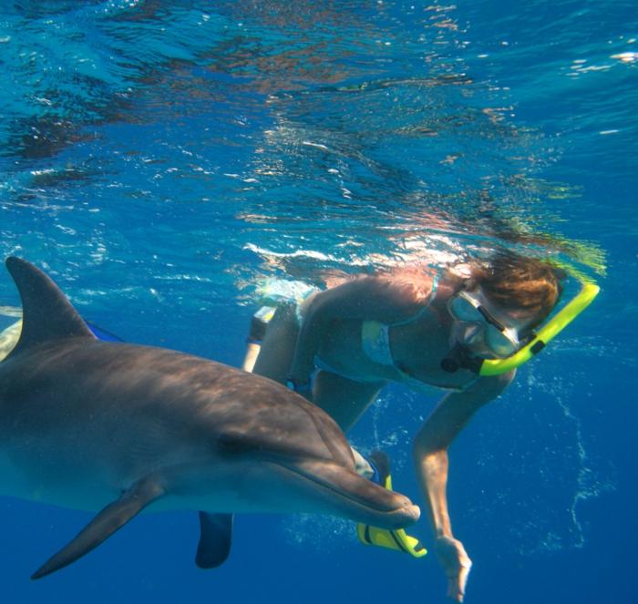 delfinen spiele