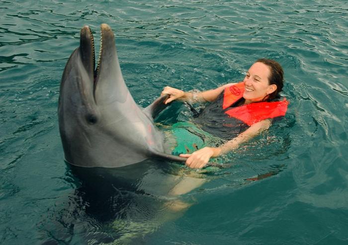 mit-delfinen-schwimmen-tanzen-im-wasser