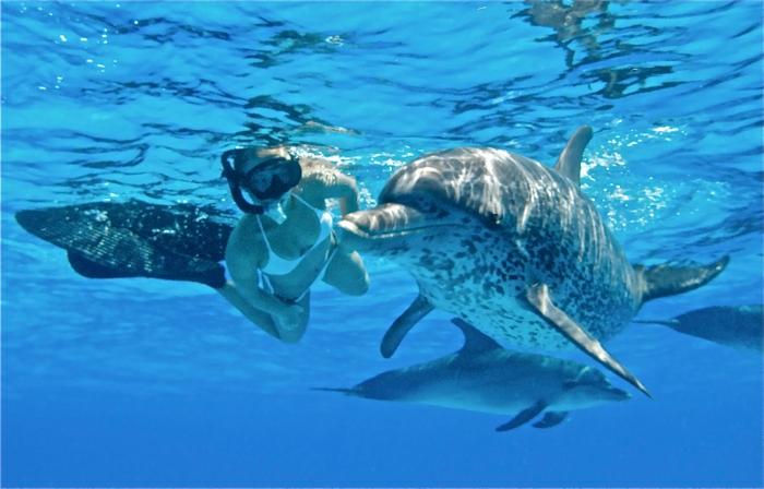 mit-delfinen-schwimmen-tolle-darstellung