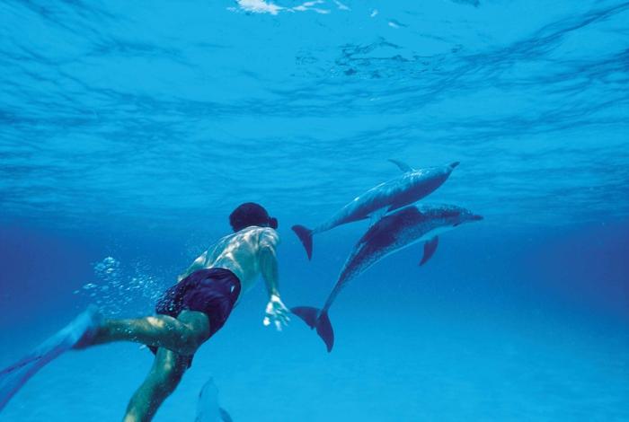 mit-delfinen-schwimmen-unter-dem-wasser