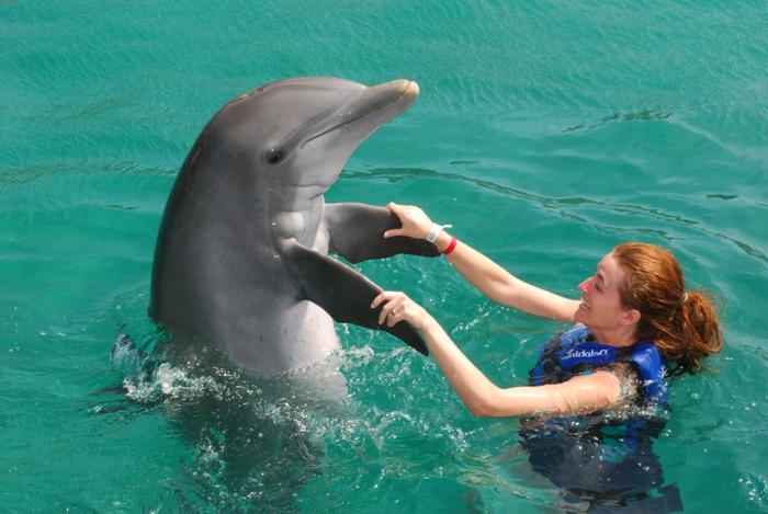 mit-delfinen-schwimmen-wunderschöne-ausstattung