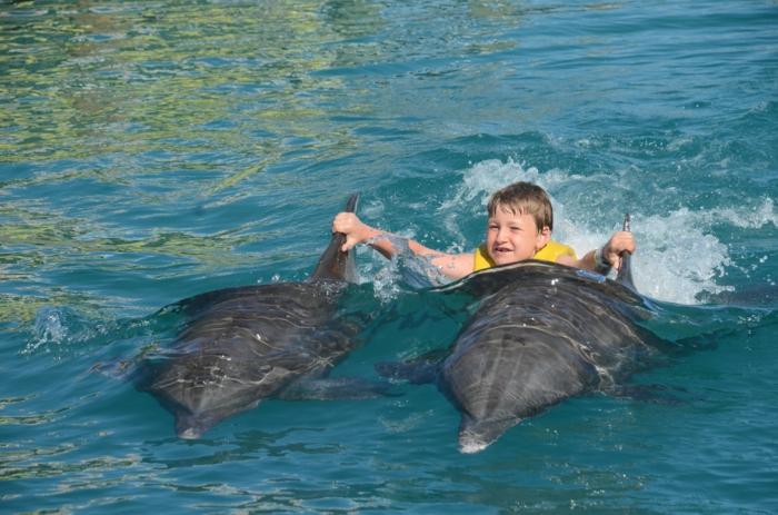 mit-delfinen-schwimmen-wunderschöne-illustration