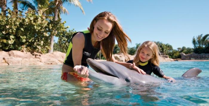 mit-delfinen-schwimmen-wunderschönes-foto