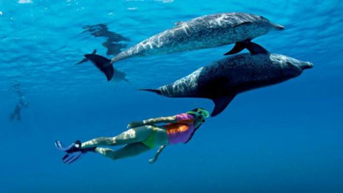 mit-delfinen-schwimmen-zwei-tiere