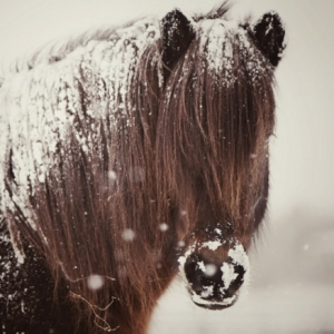 Pferde im Schnee: herrliche Bilder zum Inspirieren!