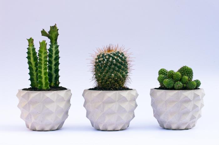 pflanzkübel-aus-beton-grüne-akzente