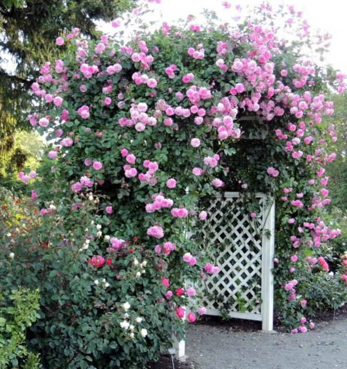 rosenbogen-aus-holz-rosige-schöne-blumen