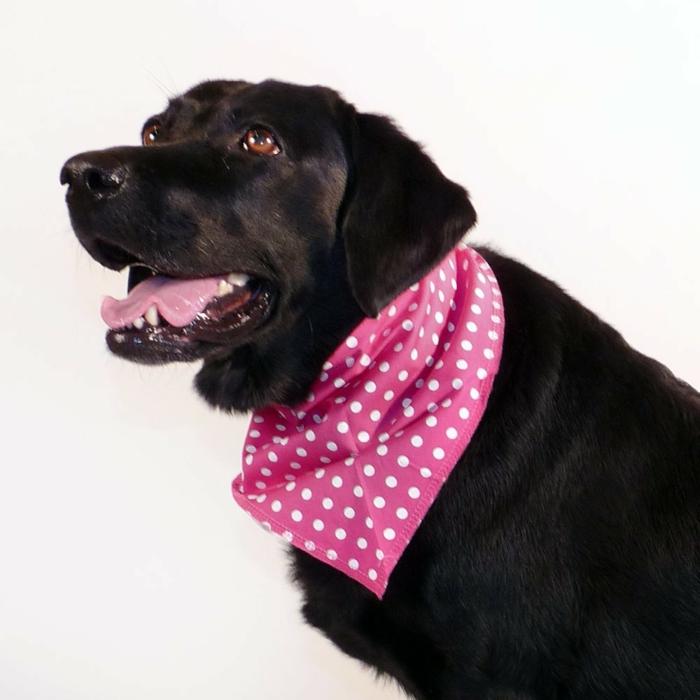 rosiges-modell-weißer-hintergrund-halstuch-für-hund