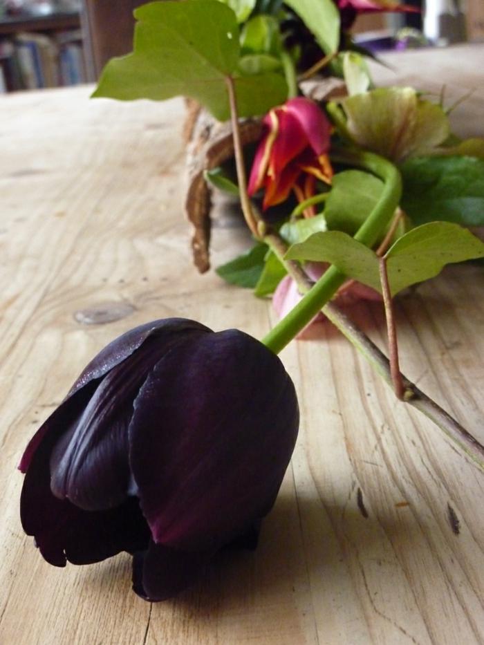 schwarze-Tulpe-Dekoration-Geschenl-speziell-romantisch-faszinierend