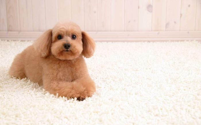 Der Shaggy Teppich eine echte Attraktion im Zimmer!